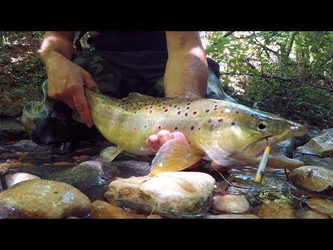 Electrofishing per pesca