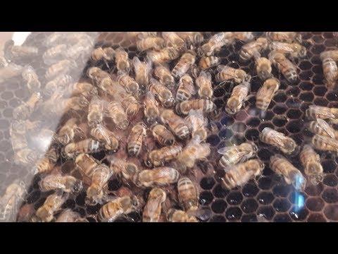 Así se produce miel en la Argentina