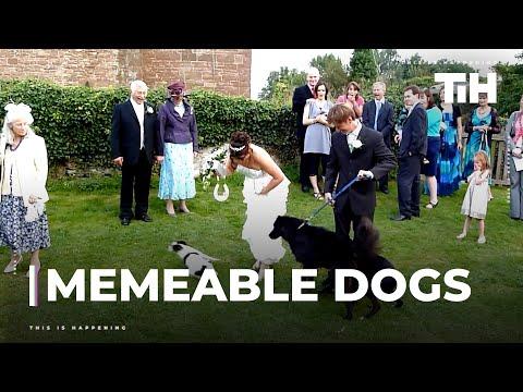 סרטון קצר עם כמה מהכלבים המצחיקים בעולם