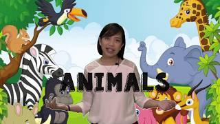 Preschool Lessons: Land Water Air Animals