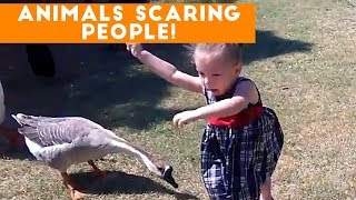 Funniest Animals Scaring People Reactions of 2017 Weekly Compilation | Funny Pet Videos - Video Youtube