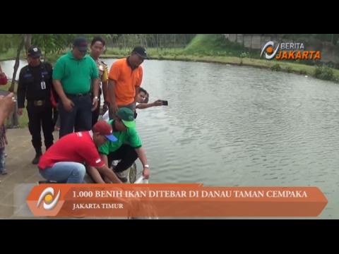 1.000 Benih Ikan Ditebar di Danau Taman Cempaka