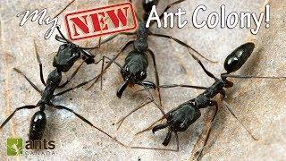 My New Awesome Ant Colony
