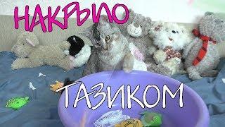 Сладун потерялся в квартире!!! Ищем котёнка!