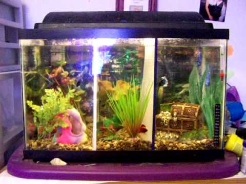 10 gallon tank split 3 ways yahoo answers for 10 fish are in a tank riddle answer