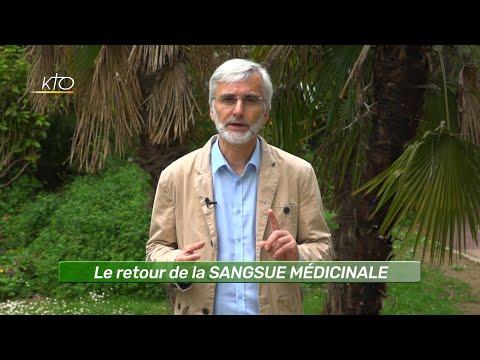 Le retour de la SANGSUE MEDICINALE