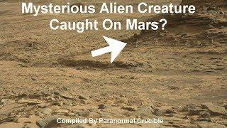 Mysterious Alien Creature Caught On Mars?
