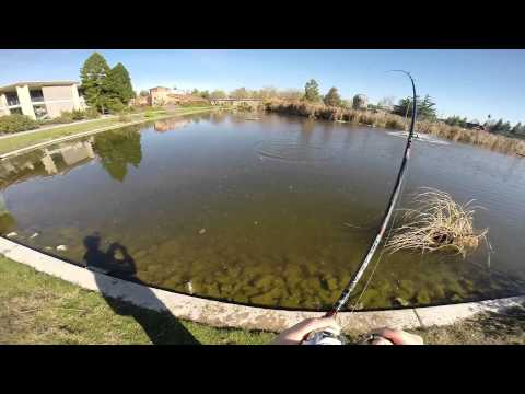 Pond Bass Fishing using a River2Sea Yabbie