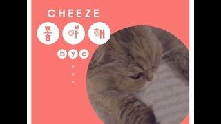 [리릭비디오] CHEEZE(치즈)_Love You(좋아해)(bye)(냥이 자장가ver.)