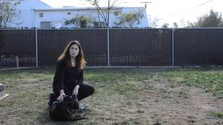 Video 5: How to Train a Lab Puppy to Come when Called