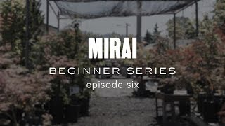 Bonsai Beginner Series - Structural Wiring