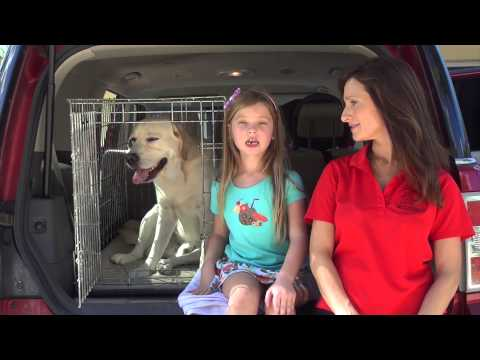 How Do You Use Your Treat&Train? Calm Behavior in the Car