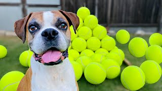 Surprising my dog with 100 GIANT Tennis Balls! 🎾🐶( BEST REACTION !!🎉