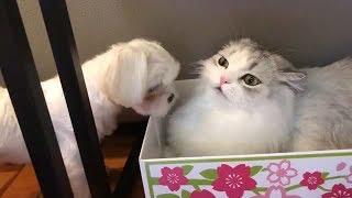 Смешные собаки Милые кошки Приколы с животными Калейдоскоп за 30 08 2018