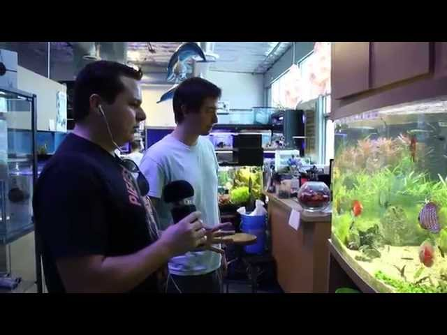 Tropical Fish Store Tours: Age of Aquariums