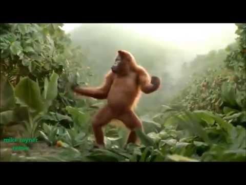 Funny Ape Song. Cartoon Parody. Dance Music Pop Songs. (Dancing Gorilla) Kids Cartoons movies