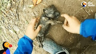 Download Youtube: Man Gives Drowning Puppy CPR | The Dodo