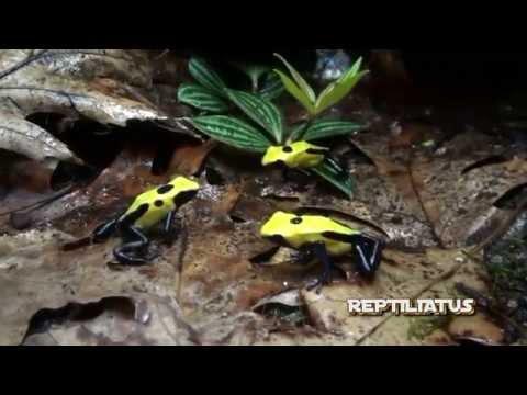 Dart frog terrarium + waterfall