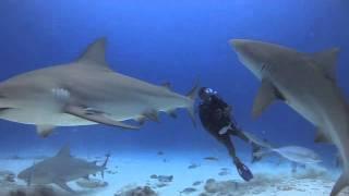 Nuestros Mares - Shark Feeding