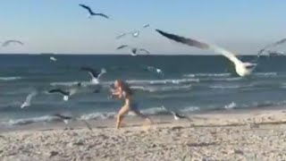 Woman on Beach Nearly Gets Attacked by Flock of Aggressive Seagulls