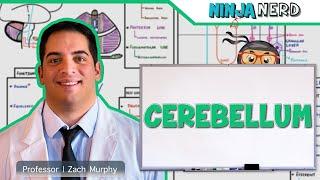 Neurology | Anatomy & Function of the Cerebellum