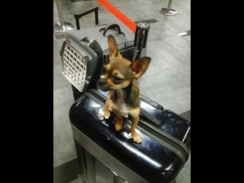 Как перевезти собаку за границу