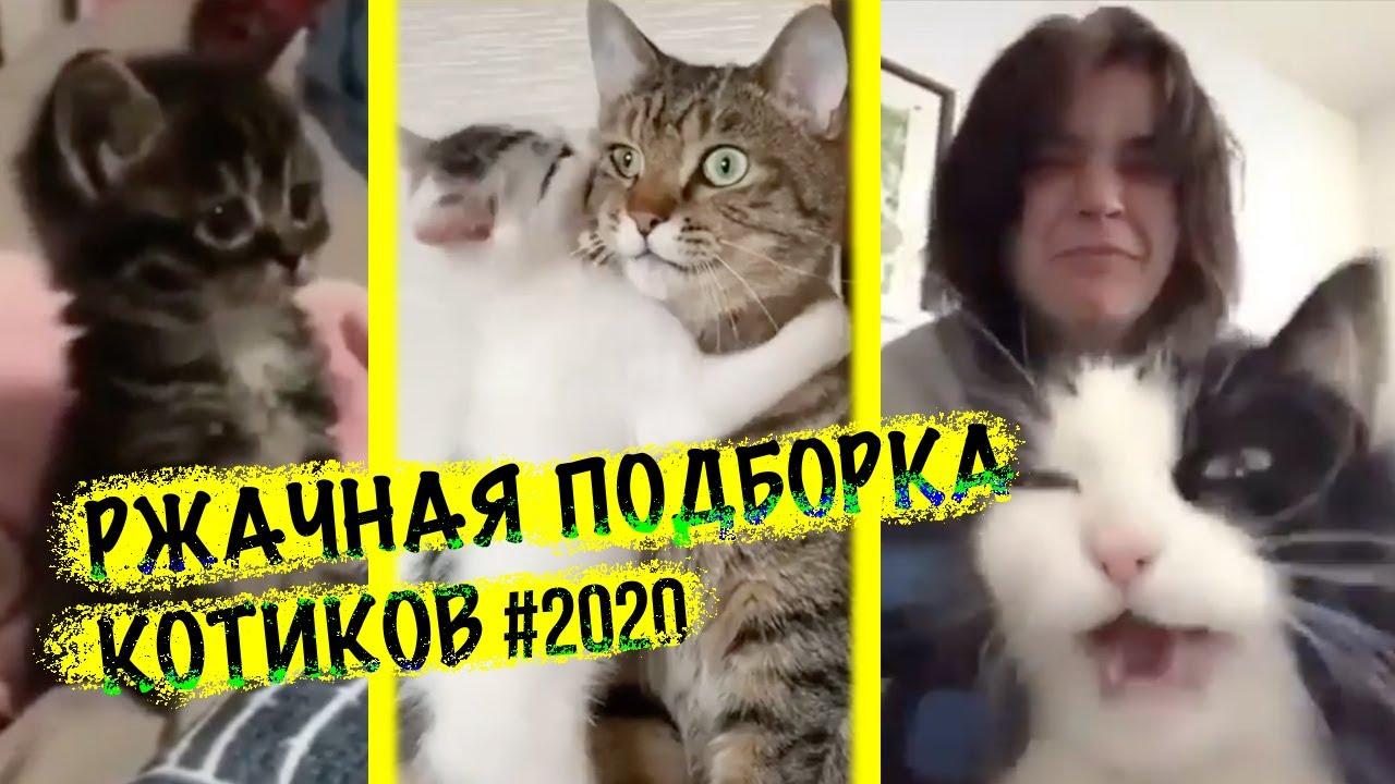 Смешная подборка котиков 2020 фото