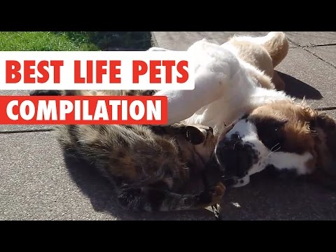 Best Life Pets Video Compilation 2017