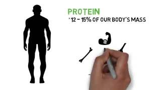 Why is Protein Important for the Human Body?