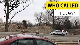 faze tari video cu politisti