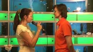 TEST.TV: Выбираем аквариумных рыбок: петушки, гуппи, пираньи?