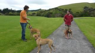 How to stop Dog Aggression quickly And easily - In a few steps!