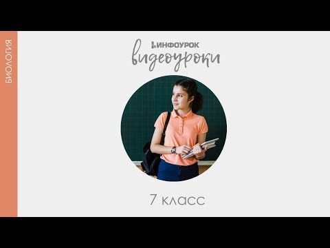 Стоимость анализа крови на лямблии в днепропетровске