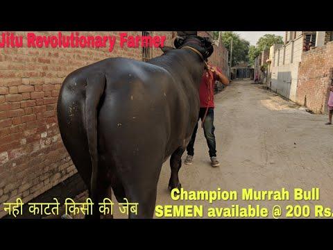 हाथी \nSemen смотреть онлайн видео в отличном качестве и