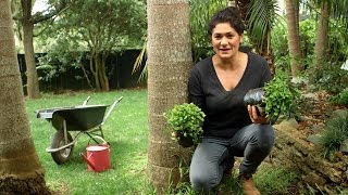 Youtube thumbnail for Using native ground cover in your garden
