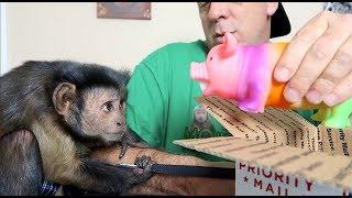 Monkey Squeaky Pig MAIL VLOG!