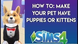 HOW TO: Get puppies or kittens in The Sims 4: Cats and Dogs | Simology