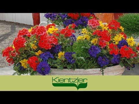 Blumen einfach pflanzen - Pflanzideen mit TrioMio