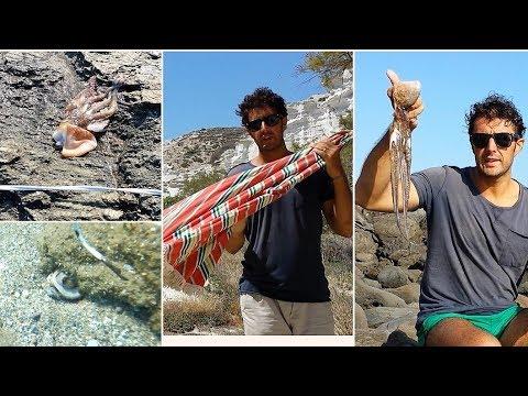 Pesca del Fiume Vorskla di video