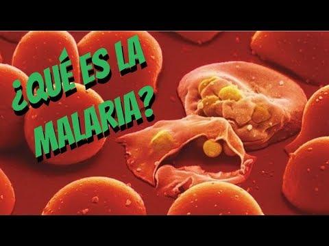 Gyógymód a szalagféreg emberben