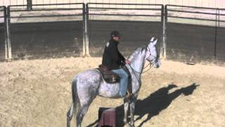 What To Do When Riding A Horse That Gets Out Of Control