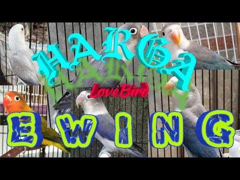 Jenis LoveBird Ewing & Harga nya November 2019