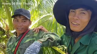 Ăn Ổ Ong Ruồi Khổng Lồ Lần Đầu Tiên Trong Đời Bắt Được | Hoang Dã Bình Thuận