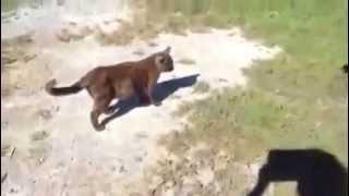 Смотреть онлайн Добрая собака пришла на помощь котенку