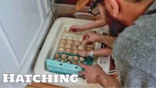 Let's Hatch Some EGGS! Silkie & Sebright Chicken Eggs Going In The Incubator (The Farm Life)