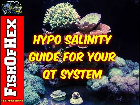 Video Basic Guide To Curing Ick/Ich With Hypo Salinity