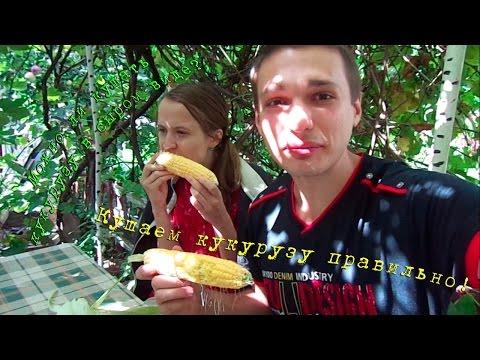 Можно ли кушать кукурузу в сыром виде?