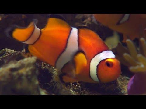 Chyba v Hledá se Nemo