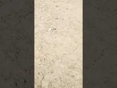 Regarder comment elles se font baiser nue à la plage de ngor à 1000f