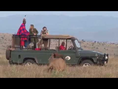 Sirikoi guests have the privilege of experiencing action-packed game drives and bush walks on Lewa Wildlife Conservancy - a World Heritage Site and renowned rhino conservancy.